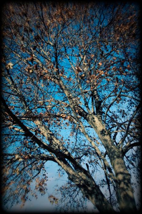 treetime